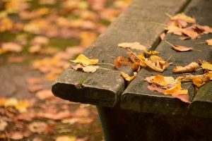 Bench and autumn leaves