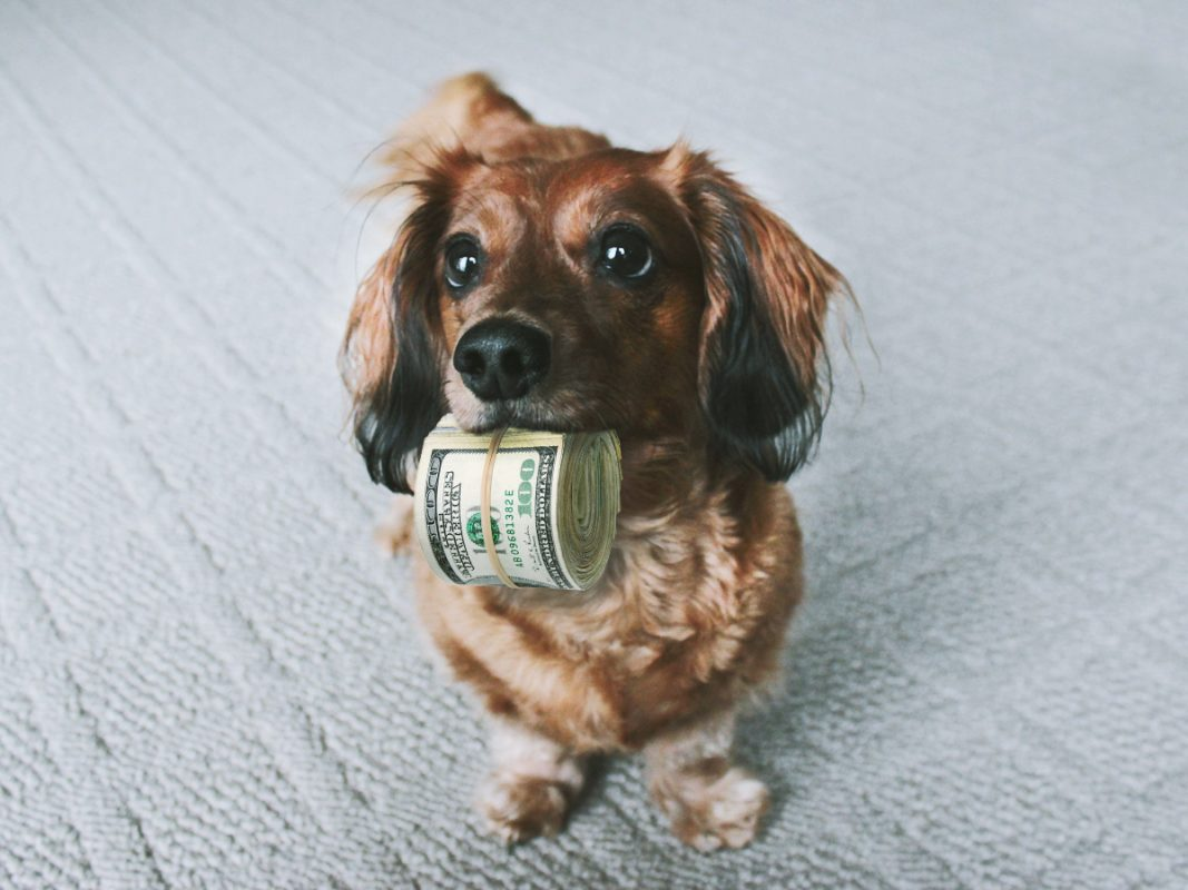 A dog with money from a pet trust fund