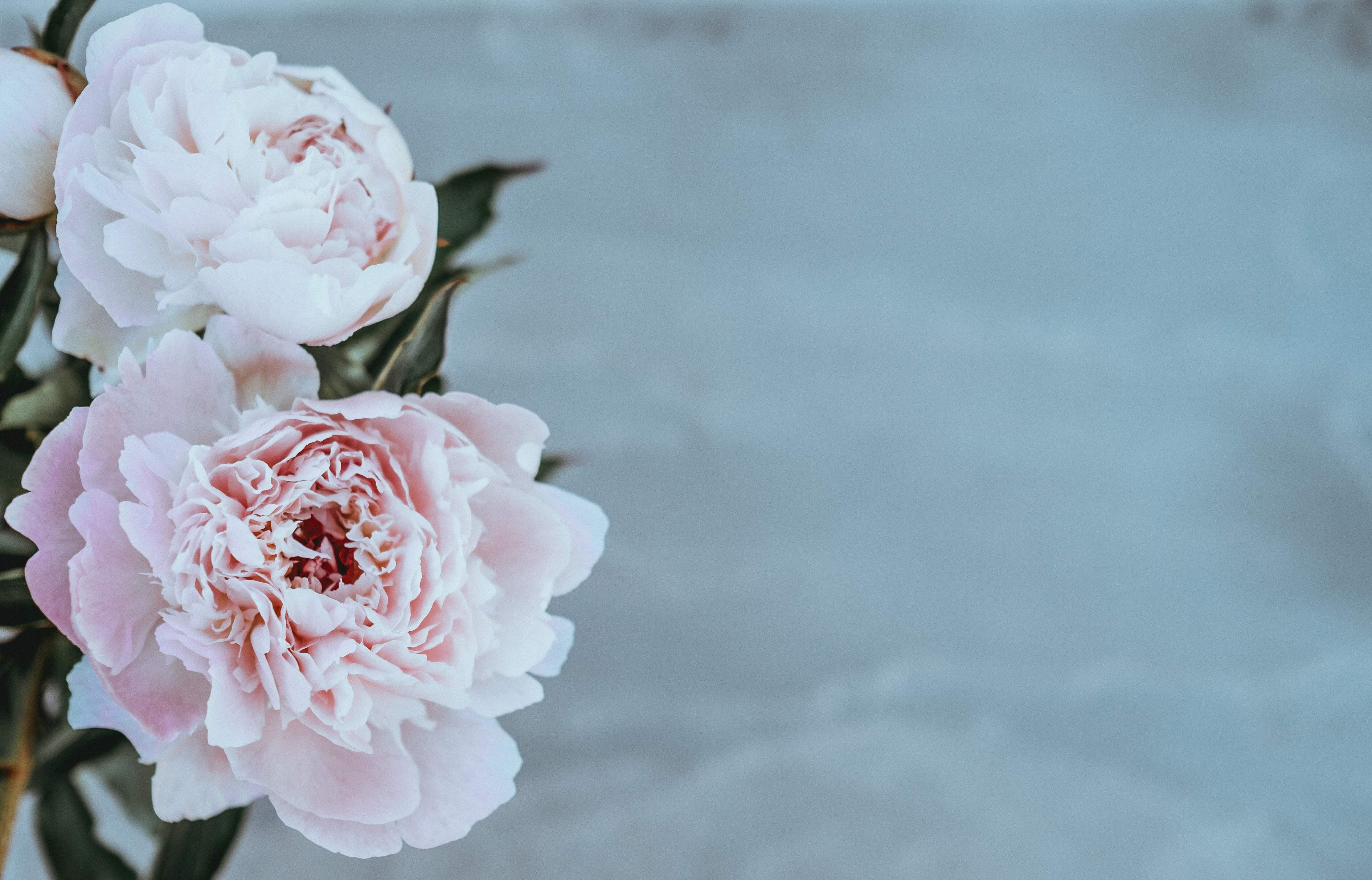 What Happens at a Cremation? | Beyond Help Centre