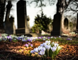 Beyond Funeral Glossary